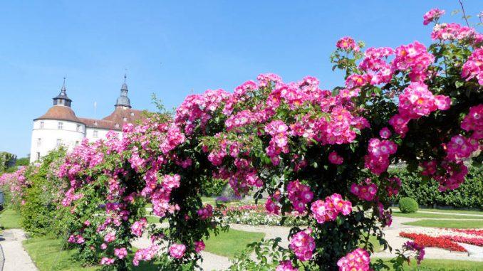 Schloss-Langenburg_Schloss-Blumen-2