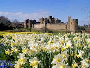Alnwick Castle, Northumberland - Blumenmeer im Frühling - (c) flickr/Wisebuys