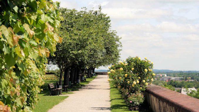Schloss-Dachau_Fernblick_5339