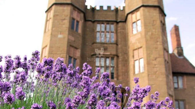 Kenilworth-Castle_Lavendelfelder