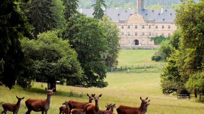 Wildpark-Tambach_Schlossblick_DSC6341