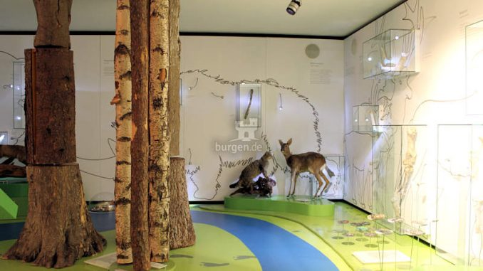 Genovevaburg_Eifelmuseum_c-Stadt-Mayen