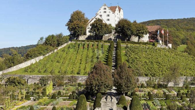 Schloss-Wildegg_Weinberge